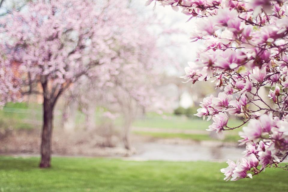 Disfruta de los árboles en primavera. Celebra la primavera con los préstamos de Ferratum