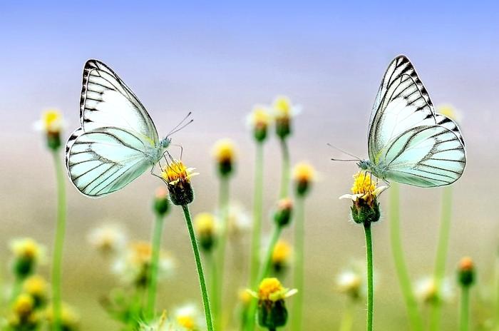 Disfruta de la naturaleza y de los paisajes de primavera con Ferratum