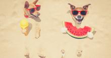 3 formas de ahorrar dinero en verano